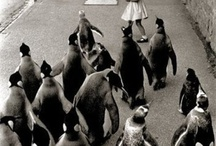 It's all about the Penguins! / by Beth Patry