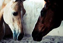 Horses / by Jennifer Womack