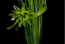 Floral designs / by Helen Miller