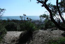 L'île d'Oléron / La plus grande des îles française sur la côte Atlantique, l'île d'#Oléron, est une île de contrastes, sauvage et authentique. Les amoureux de grand air apprécieront ses plages, forêts et marais. Au cours de belles randonnées à pied, à cheval ou à vélo, vous découvrirez l'étendue des paysages Oléronnais. / by Jardins Aliénor