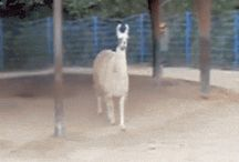 Funny GIF / by Kranked