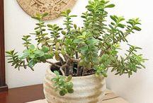 Houseplants / by julie pogantsch