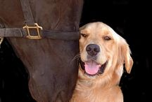 * Dog's Best Friend(s) (humans included!) / by We Love Dogs ♥ Guide Dogs Worldwide ♥