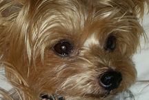 Charlie and Spike / C&S Pet Harness and Fun Photos! / by Lucy's Luxuries