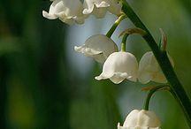 flowerings for shoulder pieces / by Elizabeth Reed