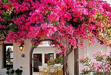 flowers / by visol