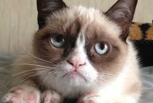 Grumpy Cat / by Madison Martin