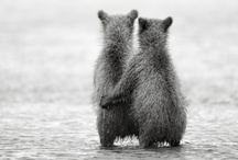 Animals - Bears - Brown / by Danielle Edwards