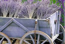 French Country Love / by Becky Jolly-wood