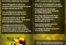 Abejas / by Michele Spichiger