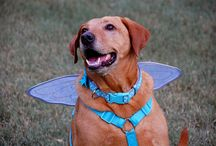 Halloween for Dogs / by DogTipper.com