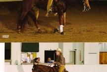 Horses / by Kilie Horst