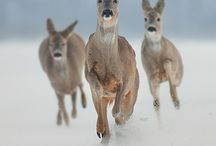 Beautiful Wildlife... / by Sharon Lawrence Smith