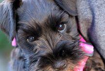 Future puppies  / by Melissa Harris
