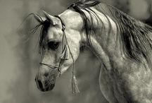 Favourite Photos / by Realistic Pencil Drawing - How To Draw