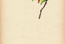 Birds / by Rae Pare