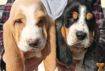 Puppys(: / by Savannah Micke