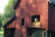 Barns,cabins and buildings / by Timothy Chapman