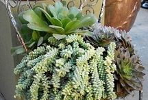 Suculants / ground box with rocks & suculant plants / by Rita Buck