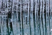 Stay Frosty / Beauty in Frost / by Lynn Sexton