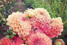 Botanicals / by Christina Hartman