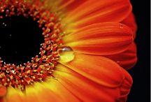 photo flowers / by Lila Wickham