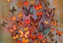 Butterflies / by Ashton Tomlin