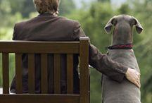 Man's best friend / by CozyWinters.com