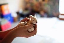 Cuteness!!! / by Kristin Driscoll