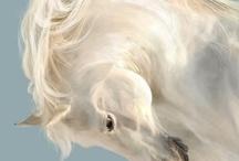 beautiful horses / by C. Cox