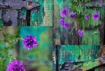 Purples & Greens / by Janis Lynn