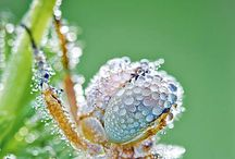 Mother Nature is beautiful.  / by Karlees Home Beauty