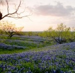 Texas Through Your Eyes / Submit your photos that show your love for Texas / by The Digital Texan