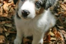 Too cute! / by Sabrina Stutzman