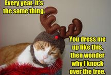 Holiday Funnies :) / by Tasha Young
