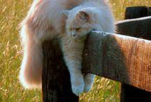 Cats / by Kim Humbard