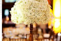 Alyssa's Wedding / by Chuck Greever