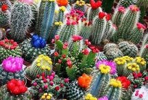- Flowers - Cactus & Socullents - / by Mario Afonso