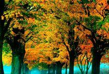 Trees / by Suzi Gautreaux