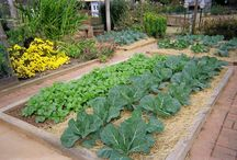Community Gardens / by NationalGardenBureau