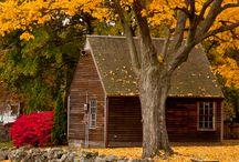 Fall / by Belinda Gillespie-Trudeau