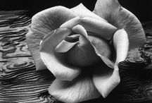 la fleur- black and white / by Amie