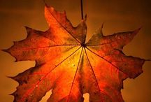 Autumn ~ Fall Leaves Are Falling / by Christine Kysely