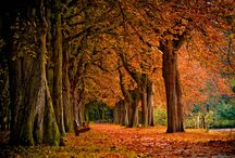 Love Fall.... 8-) / by Shannon White