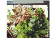 plants I like / by Nancy McLaren Taylor
