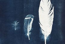 Feathers / by Rebecca Varidel