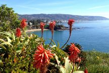 Laguna Beach, California / MY HOMETOWN... Life is good! / by Stacy Caves