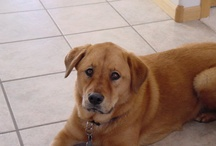 1 In a Million /   This is our dog Sunni.  She was such a great girl.  She will forever bring joy and fond memories into our lives.  We miss you Sunni Bunny.  Love You / by Sharon Montalbano