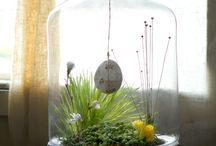 Terrariums / by Melinda Kirk