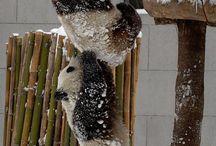 adorable animals / by Susie Neider